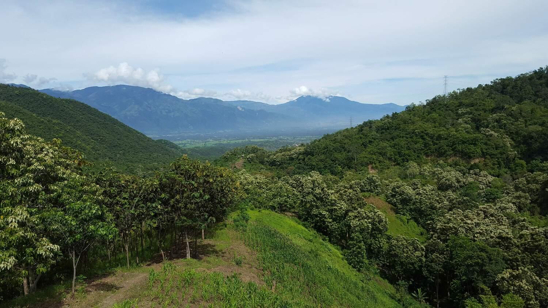 Die Landschaften in Zentral-Sulawesi, Indonesien, sind durch Kakaoplantagen geprägt.