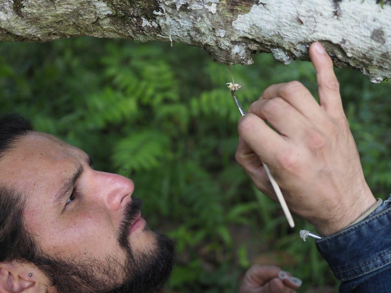 Manuel Toledo bei der Handbestäubung einer Kakaoblüte.