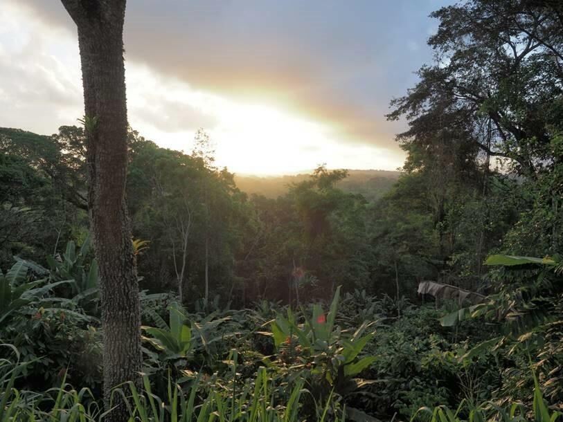 Diverse Kakao-Agroforstsysteme wie dieses Cabruca (ein traditionelles Kakaoanbausystem) in Brasilien sind von hohem Erhaltungswert für die Biodiversität.