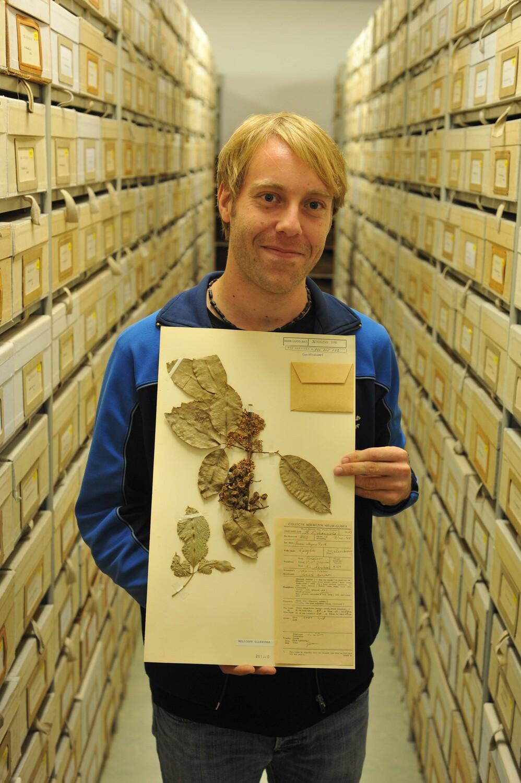 Dr. Marc Appelhans zeigt eine Art der Rautengewächse aus Neuguinea.