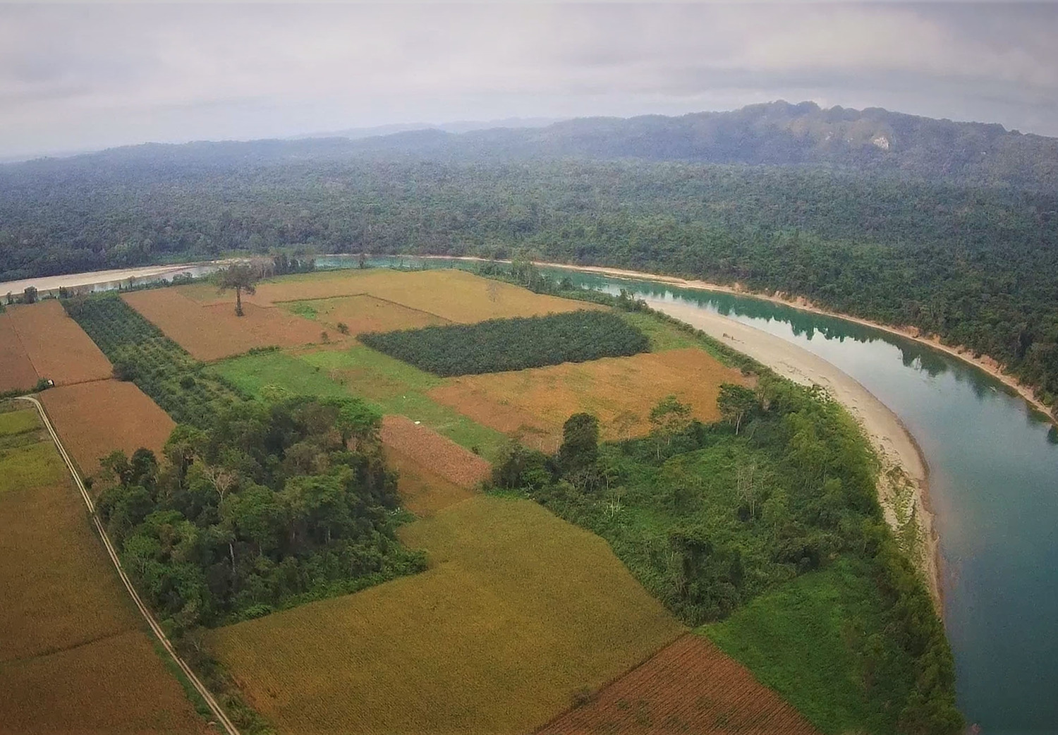 Lacandonon rainforest in southeastern Mexico: The one hectare forest in the middle has tall trees that serve as nesting places for rare macaw parrots.
