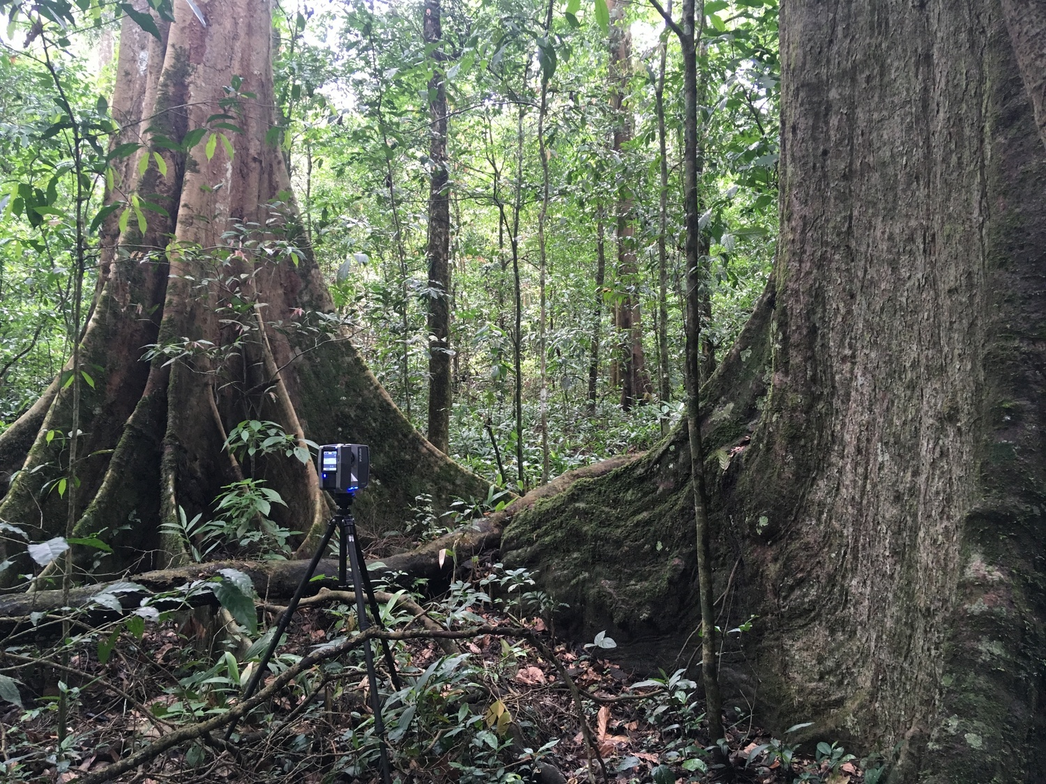 3D laser scanners were set up in many forest areas around the world. The tropical rainforest in Uganda is shown here.