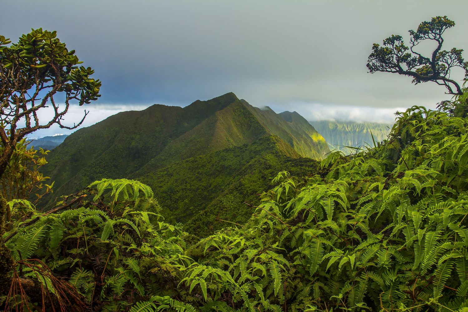 The Ko'olau summit on the island of O'ahu in Hawai'i where researchers found that biodiversity is higher in forests on older islands than on younger ones, but that this effect may be diluted by introduced species.