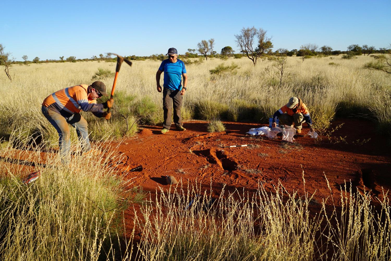 Ausgrabungen in einem Feenkreis. Zu sehen sind drei der Co-Autoren der Studie Dr. Todd E. Erickson, Dr. Hezi Yizhaq und Dr. Miriam Muñoz-Rojas (v.l.r.).