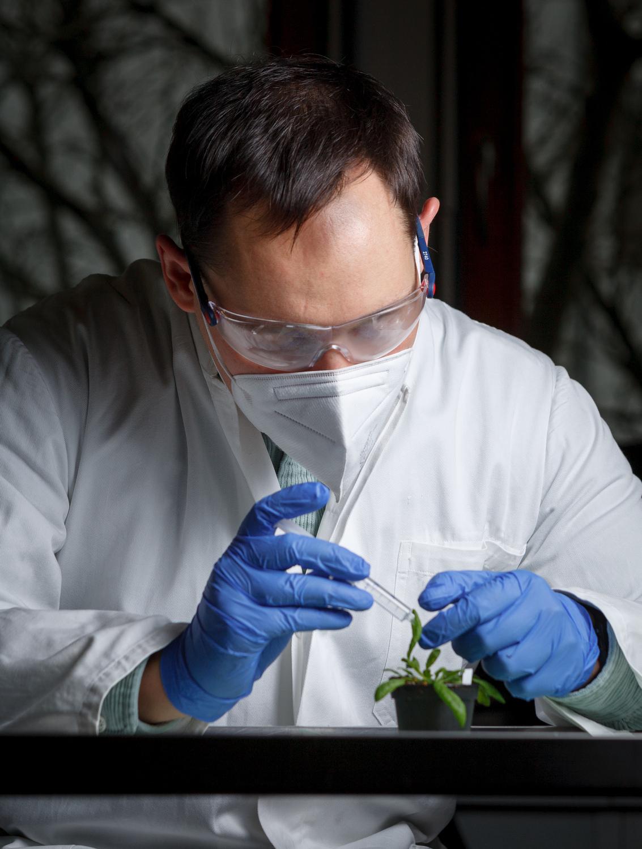 Das Blattmaterial dient als Basis für die Metabolitenanalyse.