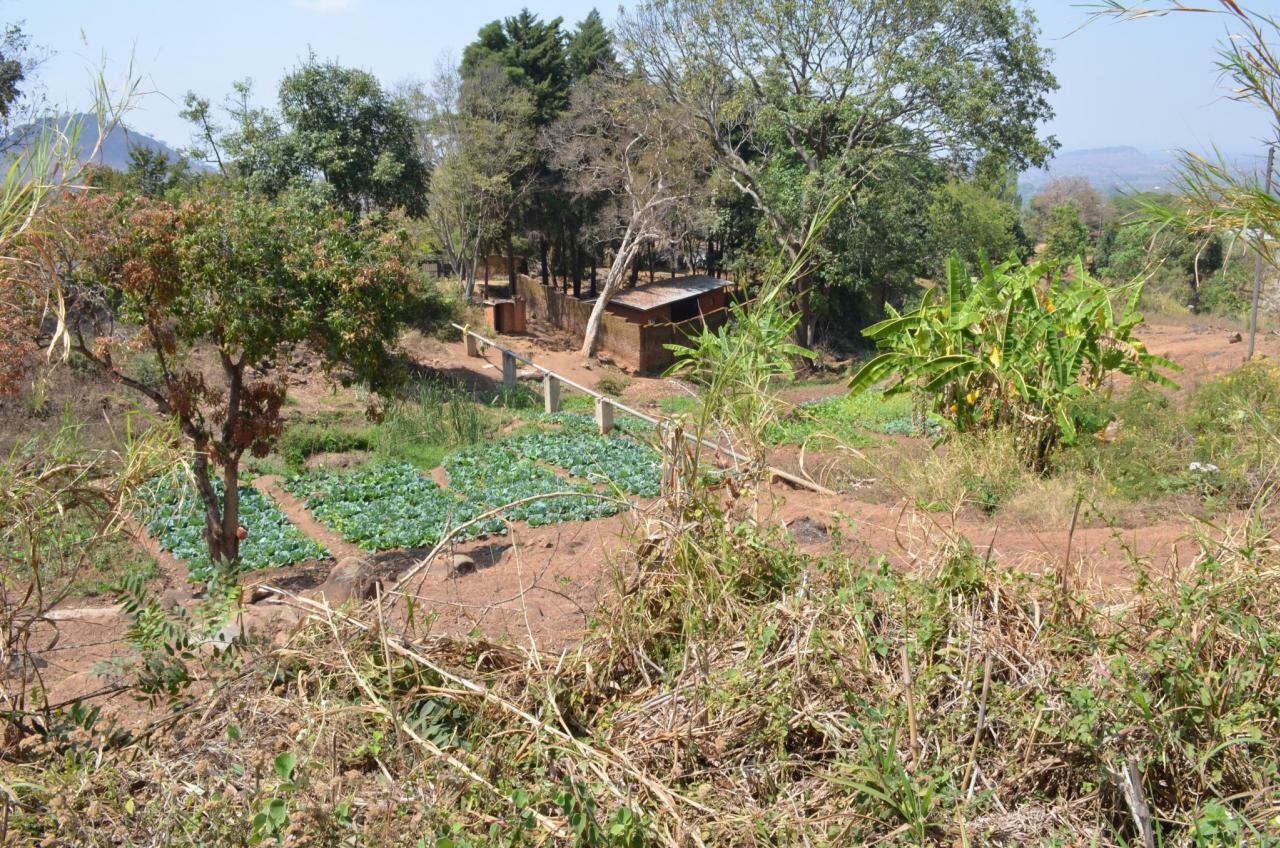 Methoden der Genomchirurgie können helfen, die kleinbäuerliche Landwirtschaft in Afrika produktiver, umweltfreundlicher und klimaangepasster zu machen.