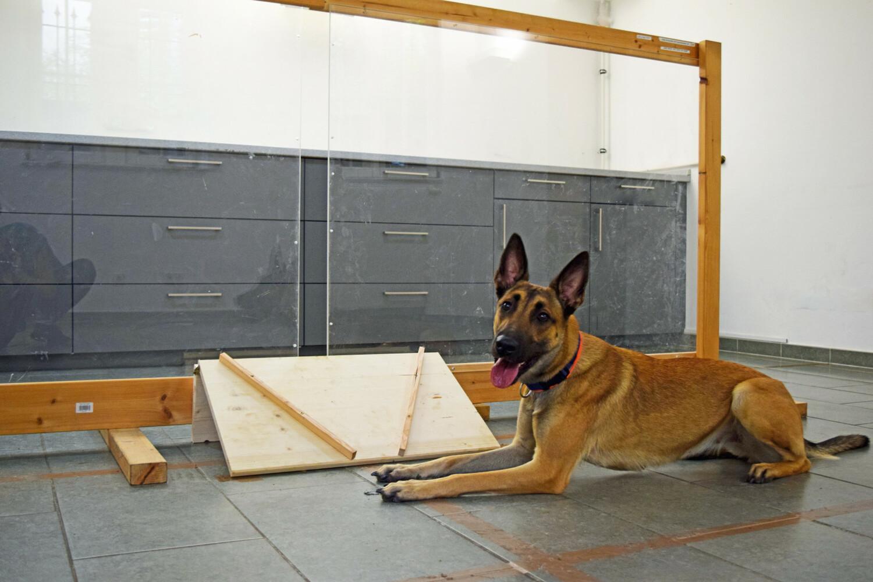 Hund und Versuchsleiterin saßen auf gegenüberliegenden Seiten der Trennwand, durch deren Öffnung die Versuchsleiterin den Hund fütterte.