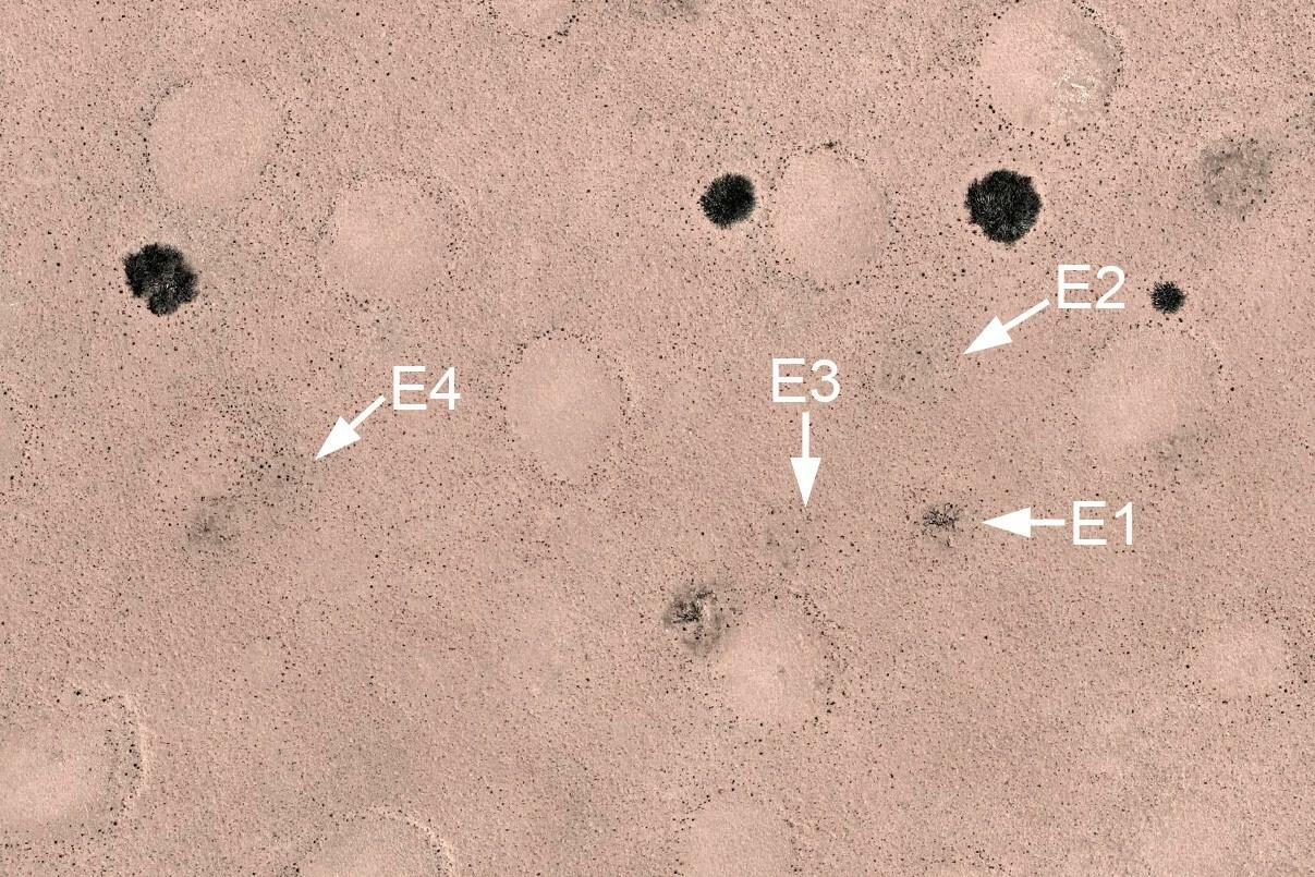 Ein georeferenziertes Drohnenbild von vier verrottenden Euphorbia damarana, die von Theron markiert wurden. Keiner dieser Euphorbia-Standorte entwickelte sich mit der Zeit zu einem Feenkreis. Die dunklen Flecken im Bild zeigen auch einige lebende Euphorbia-Büsche, und die kahlen Flecken sind die viel größeren Feenkreise um sie herum.