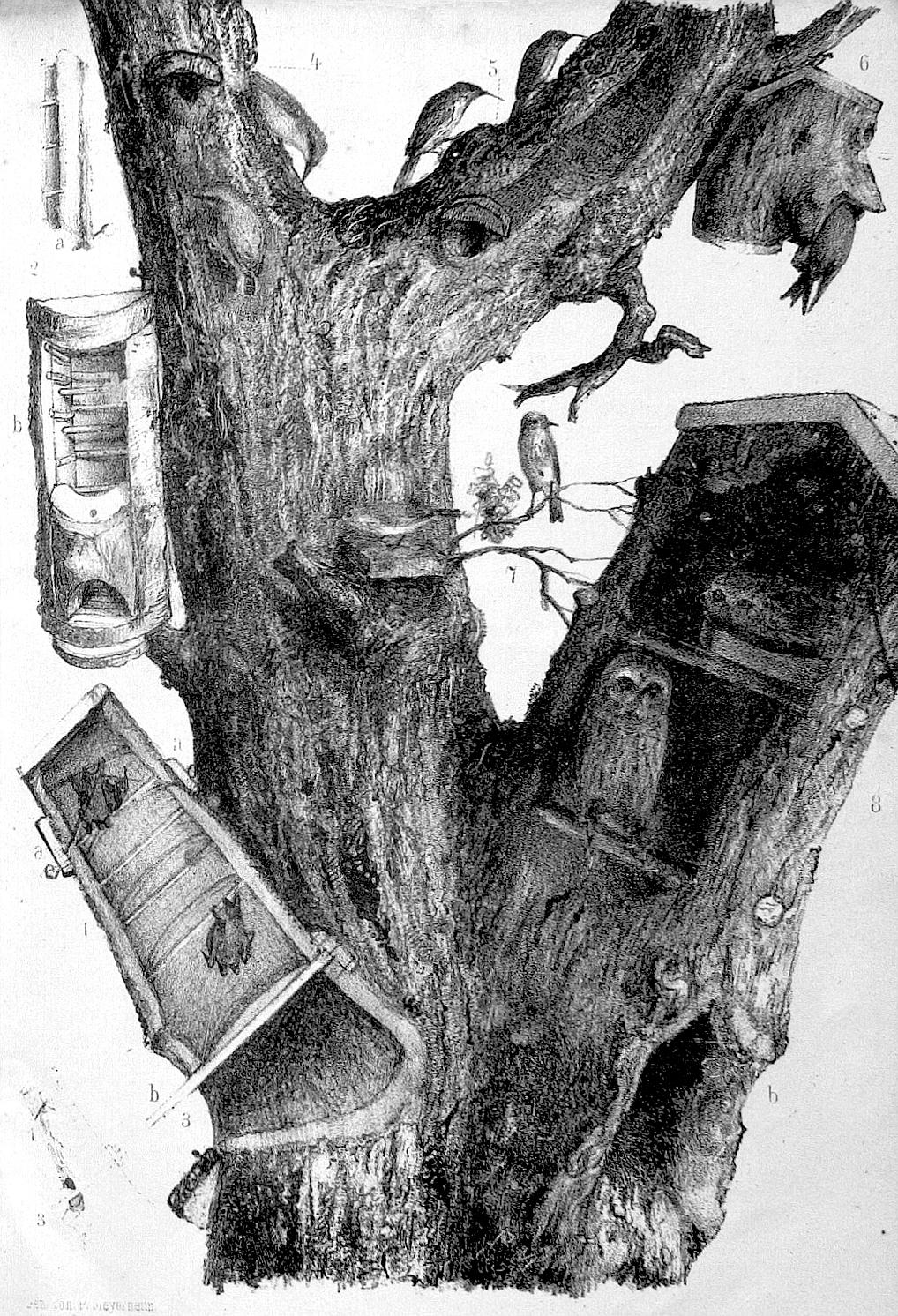 Eichen-Habitatbaum im 19. Jahrhundert, ausgestattet mit verschiedenen Schlaf- und Brutkästen für Vögel und Fledermäuse. Lithographie von Paul Meyerheim aus dem Jahre 1865.