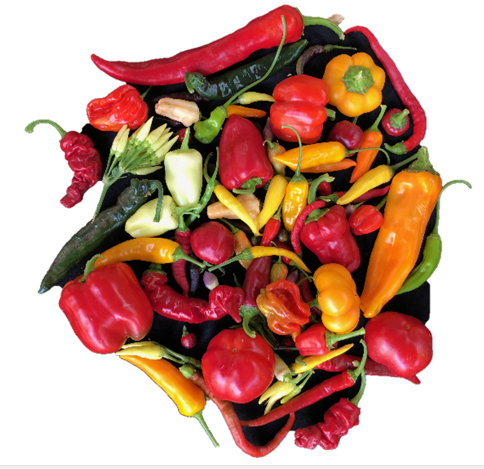 The researchers conducted a huge genomic scan of over ten thousand pepper samples from worldwide genebanks and used the data to investigate the history of this iconic staple.