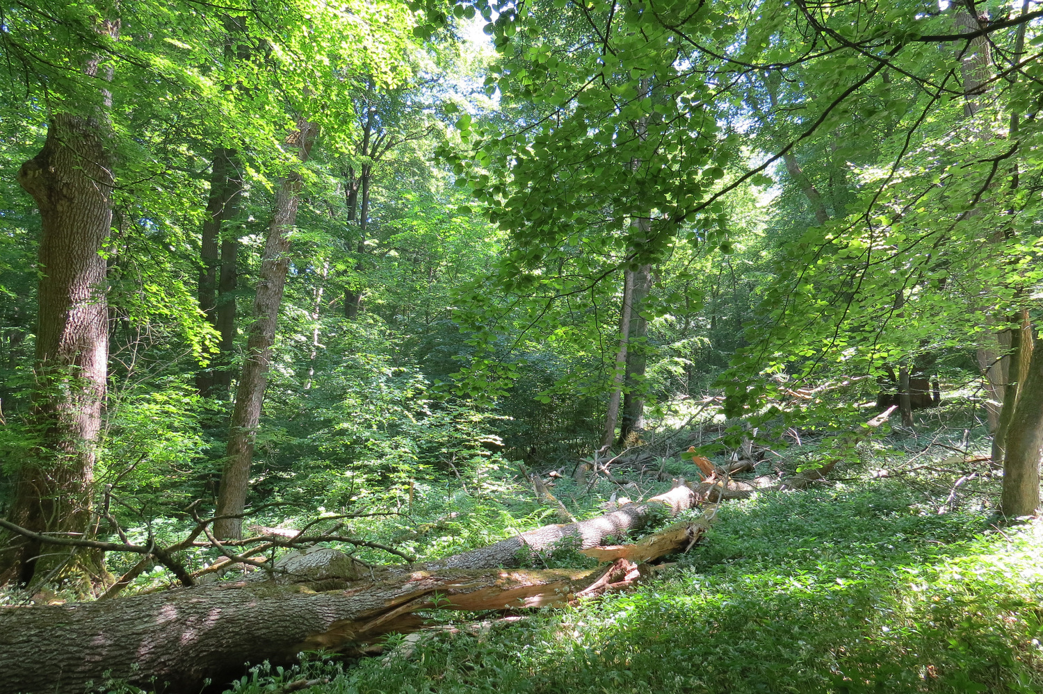 Life and Death: Natural forest dynamics in the Hainich National Park as part of the UNESCO World Natural Heritage Site