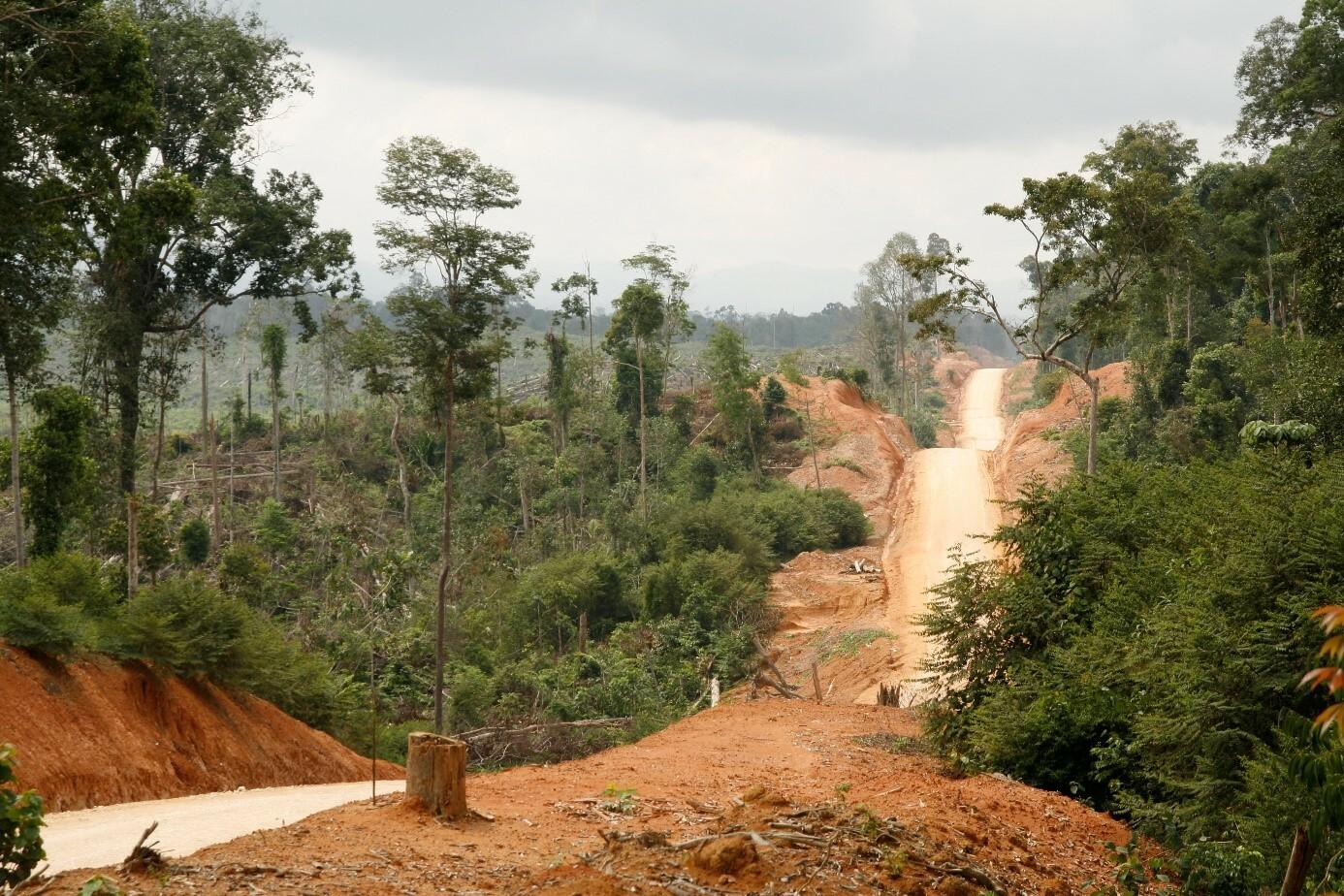 Abholzung zur Anpflanzung von Ölpalmen auf einem stark verwittertem Boden in den Tropen.