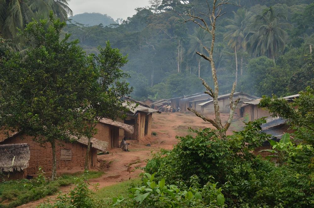 Im Südwesten Kameruns finden sich noch großflächige, artenreiche Regenwälder mit eingebetteten traditionellen Siedlungs- und Agroforststrukturen; hier das Dorf Ikenge im Norden des Korup-Nationalparks.