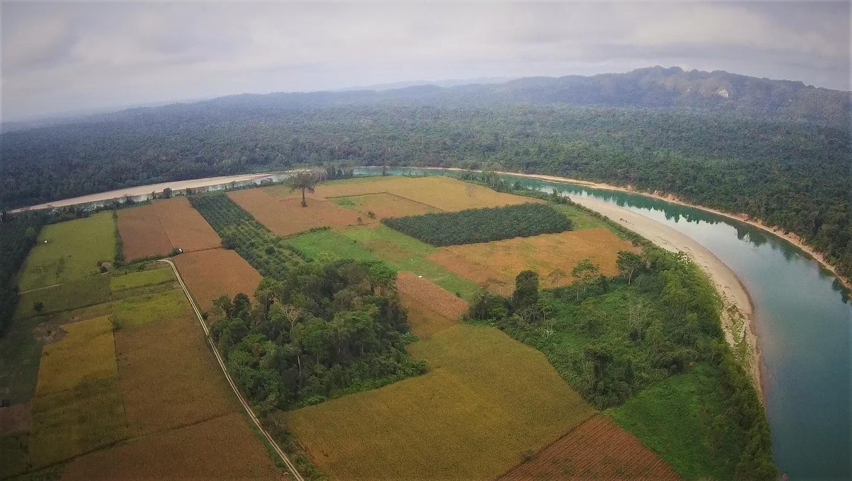 Lacandona-Regenwald im Südosten Mexikos: Das ein Hektar große Waldstück in der Mitte hat hohe Bäume, die als Nistplatz seltener Ara-Papageien dienen.