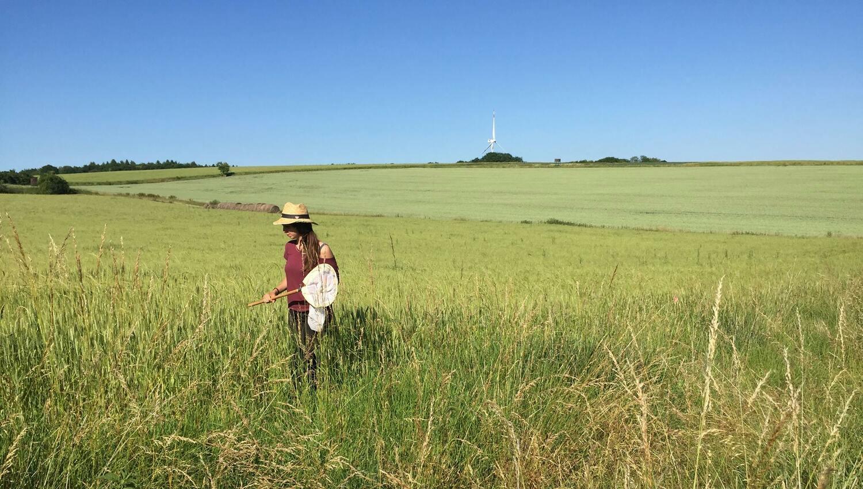Costanza Geppert beim Käschern von Bienen am Rande eines Getreidefelds.