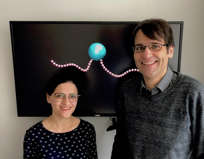 Dr. Sarah Mohammadinejad und Prof. Dr. Stefan Klumpp aus Göttingen haben die Simulationen durchgeführt.